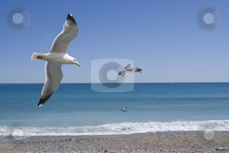 Soaring stock photo, 3 Seagulls flying against mediterranean sea in french Riviera by Serge VILLA