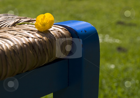 Spring flower on chair stock photo, Spring flower on blue wooden chair with shallow depth of field by Laurent Dambies