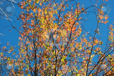 Autumn Branches stock photo, Glowing branches in autumn. by Charles Jetzer