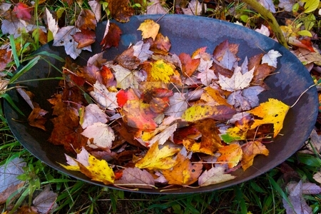 Bowl of Foliage stock photo, Autumn leaves collected in a bowl. by Charles Jetzer
