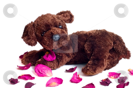 Puppy Pedals stock photo, Puppy surrounded by dried rose pedals by Johan Knelsen