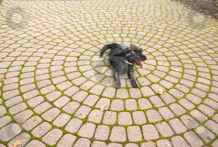 Puppy Stone stock photo, Stone walk way with a puppy on it by Johan Knelsen