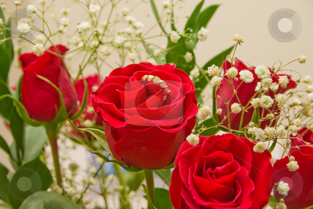 Special Red Rose With A Ring stock photo, Bouquet of red roses for someone special by Johan Knelsen