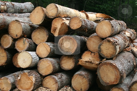 Logging stock photo, Carefully stacked logs, awaiting pick up by truck by Tom and Beth Pulsipher