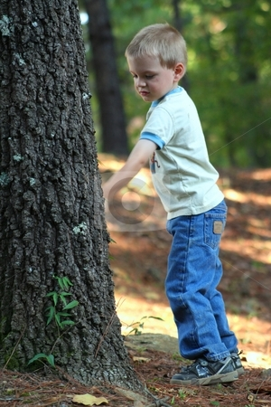 Little boy playing with a tree stock photo, Little boy playing in the yard with a tree by Debbie Hayes