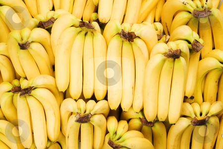 Bananas stock photo, Many bunches of fresh yellow bananas fill the frame by Scott Griessel