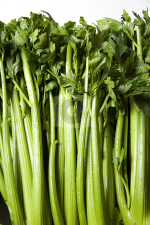 Celery stock photo, Closeup of green celery on a white background by Scott Griessel