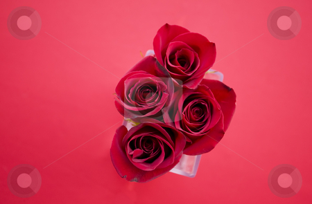 Red Roses stock photo, Tight red rose arrangement shot from above by Scott Griessel