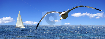 Seagull aiming for a sailboat stock photo, The seagull and the sailing boat by Serge VILLA