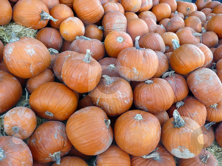 Pumpkins stock photo,  by Corinna Walby