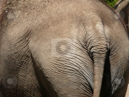 Elephant stock photo, An elephant resting in the sun. by Corinna Walby