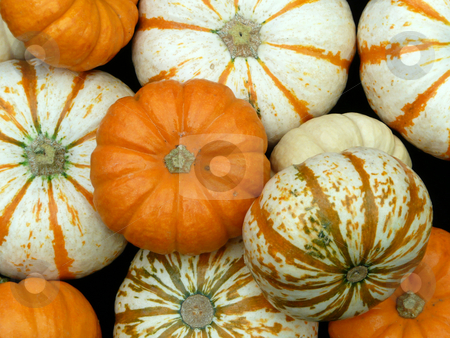 Group of Pumpkins stock photo,  by Corinna Walby