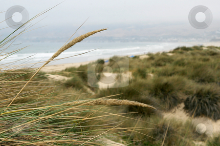 Pismo Beach stock photo, Pismo Beach along the Central California Coast by MIca Mulloy