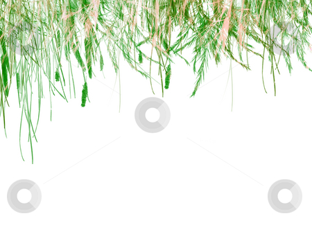 Green Grass on White Background Texture stock photo, Green Grass on White Background Texture Design As Header by Robert Davies
