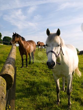 Horse in Beautiful Green Field in British Summer Morning stock photo, Horse in Beautiful Green Field in British Summer Morning by Robert Davies