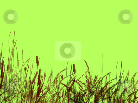 Grass and Reeds on Green Background  stock photo, Grass and Reeds on Green Background Illustration Design by Robert Davies