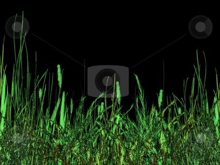 Green Grass at Night Illustration stock photo, Green Grass At Night Illustration on Black Background by Robert Davies