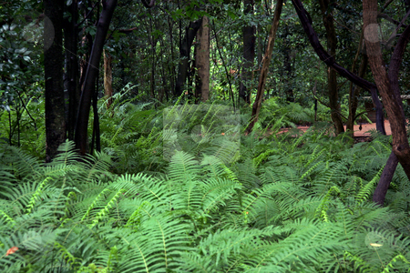 Fern Forest stock photo, A forest floor covered in lush ferns by Kevin Tietz
