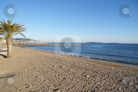 Palm beach stock photo, A sand beach with palm tree near the city of Cannes in French Riviera by Serge VILLA