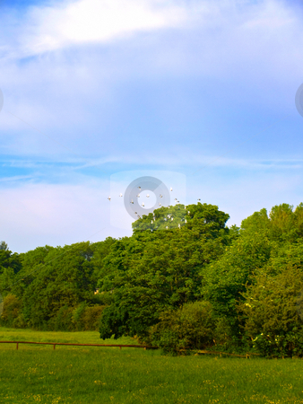Flock of Birds Flying Across the Sky in an English Summer stock photo, OLYMPUS DIGITAL CAMERA by Robert Davies