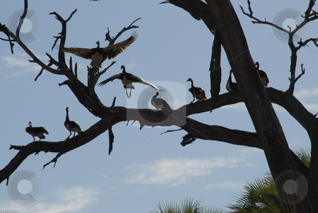 Birds in a tree stock photo, Birds resting on a tree by Johnny Griffin