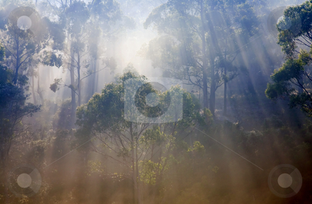 Revelation stock photo, Light streaming through the gum trees in the forest of NE Tasmania. Much is revealed by the light! by Mike Dawson