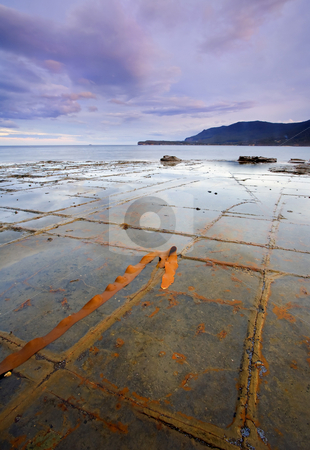 The Grid stock photo, Kelp adds color to the gridlike rock formation known as tesselated pavement on the Tasman PEninsula by Mike Dawson