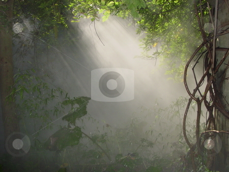 Sun Shining Through stock photo,  by Lori Kirk