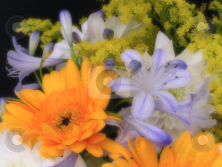 Dreamy flowers. stock photo, Bouquet of flowers, made to look soft and dreamy. by Annika Str?