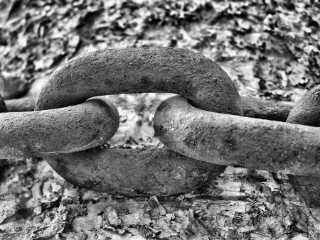 Chain stock photo, Old rusty metal chain on a tree. by Annika Str?