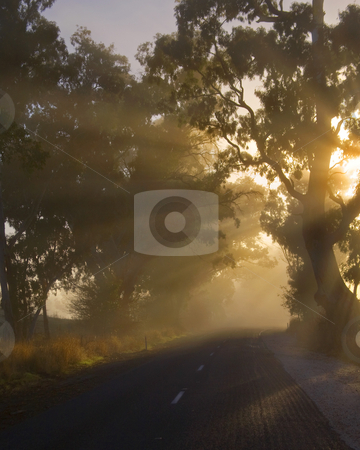 The Road less Traveled stock photo, A back country highway lined with gum trees and shrouded in mist as the sun rises over the Adelaide Hills in South Australia. by Mike Dawson