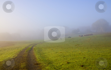 Country Roads stock photo, A Country road leads one into the paddock shrouded by fog in the hills above Adelaide, South Australia. by Mike Dawson