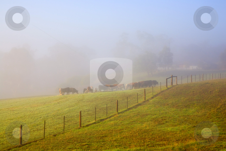 Hidden in the Mist stock photo, A rural cattle ranch hidden in the fog and mist of a Adelaide Hills Morning. by Mike Dawson
