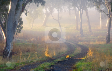 Into the Mist stock photo, A country lane fades into the mist of a crisp Autumn morning in the Adelaide Hills REgion of South Australia by Mike Dawson