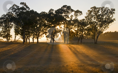 Morning Shadows stock photo, Shadows lines across a golden field as a new dawns in the Adelaide Hills of South Australia by Mike Dawson