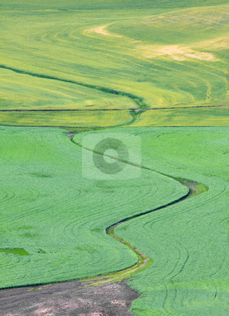 Ag Art stock photo, Crop lines in the wheatfields of the Palouse from Steptoe Butte. An artist culd not have sculpted more elegant lines and curves by Mike Dawson