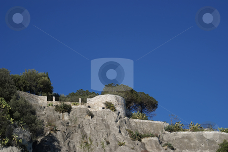 Garden stock photo, Mediterranean flora in Provence (French Riviera) by Serge VILLA