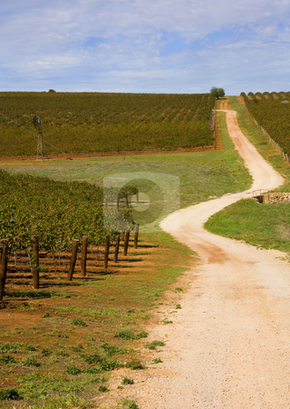 Barossa Vineyard stock photo, A  gravel road winds through some Barossa Vineyards by Mike Dawson