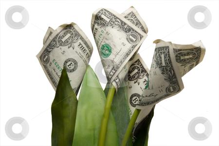Money Flower stock photo, Money Flower Pot by Robert Byron