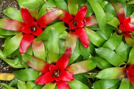 Green and red cactus stock photo, Green and red colored cacti leaves by Wes Shepherd