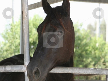 Horse in stable stock photo, Horse sticking it's head out of the stable door by Lori Kirk