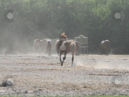Galloping horse stock photo, Horse running at a horse ranch by Lori Kirk