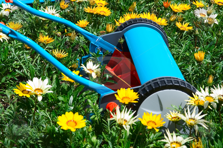 Mowing flowers stock photo, Manual lawn mower in flowers, kind of environment concept by Claude Beaubien
