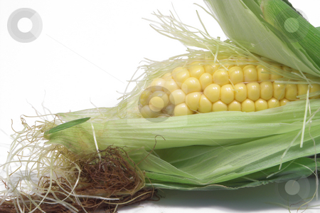 Corn on the Cob stock photo, A delicious ear of corn on the cob. by Robert Byron