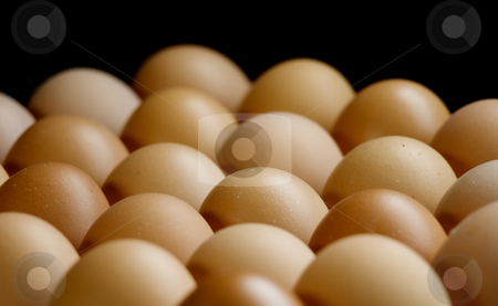 Eggs stock photo, Eggs sorted below soft and warm light. by Sinisa Botas