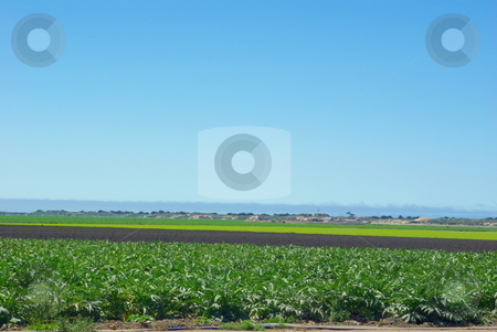 Coastal Farmland Crops stock photo, Artichoke and lettuce crops separated by land ready for new planting in californias coastal farmland. by Lynn Bendickson