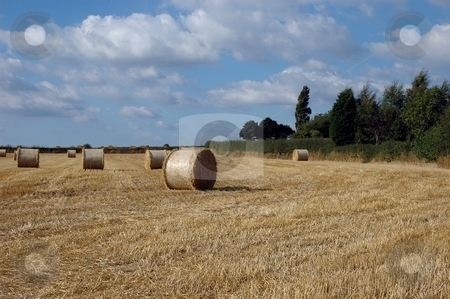 Fields of Hay stock photo, Fields of hay, Norcott Brook, Cheshire by Ray Roscoe
