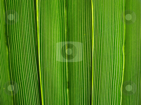 Vibrant green leaf lines macro natural abstract background. stock photo, Vibrant green leaf lines macro natural abstract background. by Stephen Rees