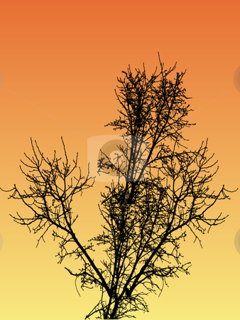 Bare sunset vector trees stock vector clipart, Bare vector trees at sunset by Michelle Bergkamp