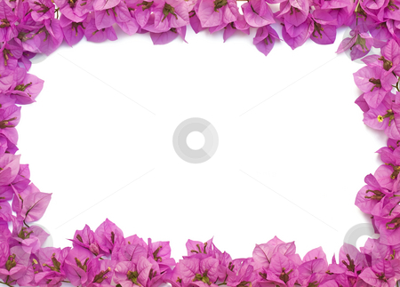Pink flowers frame stock photo,  by Sinisa Botas